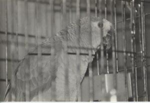 8-strathcarron-parrot